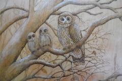 Bared owl family