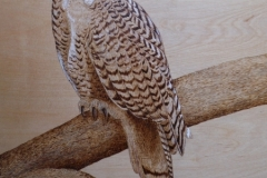 snowey-owl-2